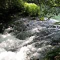 River Flows by Paulene Schmedeke