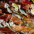 River Leaves by LeeAnn McLaneGoetz McLaneGoetzStudioLLCcom