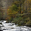 River Lyn In Autumn by Dr Keith Wheeler