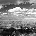 River Of Grass - The Everglades by Myrna Bradshaw