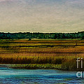 River Of Grass by Judi Bagwell