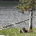 River Otter by Belinda Greb