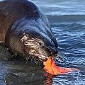 River Otter by Doug Lloyd