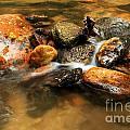 River Rocks by Adam Jewell