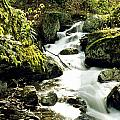 River With Rocks In The Forest by David Chapman
