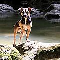 Riverdog by Carlos Felix Porrata
