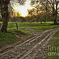 Road Less Traveled by Cris Hayes