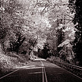 Road Through Autumn - Black And White by Kathleen Grace