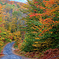 Road Through Autumn Woods by Larry Landolfi and Photo Researchers