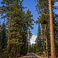 Road Through Lassen Forest by Greg Nyquist