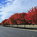 Road To Fall Colors by Richard Leon