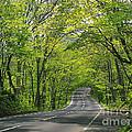Road To Gatlinburg Tn by Elizabeth Coats