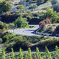 Road Winding Through Vineyard And Olive Trees by Jeremy Woodhouse