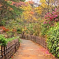 Road With Fence by ~~**Yuri's Photography**~~