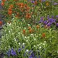 Roadside Flowers, Cascade Mountains, Usa by Bob Gibbons