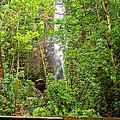Roadside Waterfall by Paulette B Wright