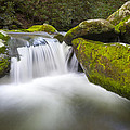 Roaring Fork Great Smoky Mountains National Park - The Simple Pleasures by Dave Allen