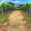 Robert Mondovi Vineyard Path by Randy Wehner Photography
