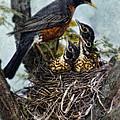 Robin And Babies In Nest by Jill Battaglia