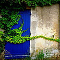 Robust Vine On Blue Door by Lainie Wrightson