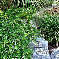 Rock Garden Beauty by Kathy Lewis