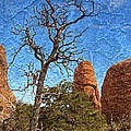 Rock Garden Skeleton Arches National Park by John Stephens