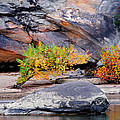 Rock Shrub And Bluff At Cumberland Falls State Park by Greg Matchick