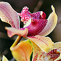 Rocking Chair Orchid by Kaye Menner