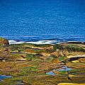 Rockport Shoreline by Erica McLellan