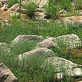 Rocks And Grass At Amidon Conservation Area Missouri by Greg Matchick