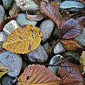 Rocks And Leaves by Bill Owen