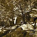 Rocks And Trees 1 Sepia by Maynard Smith