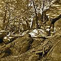 Rocks And Trees 2 Sepia by Maynard Smith