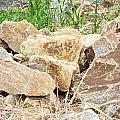 Rocks Bonham State Park Tx by Dianna Lawson