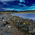 Rocky Beach In Western Canada by Louise Heusinkveld