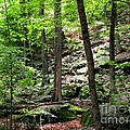 Rocky Forest Of Chatfield by Meandering Photography