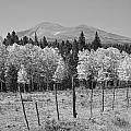 Rocky Mountain High Country Autumn Fall Foliage Scenic View Bw by James BO  Insogna