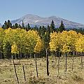 Rocky Mountain High Country Autumn Fall Foliage Scenic View by James BO Insogna