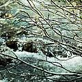 Rocky Mountain Stream by Ellen Heaverlo