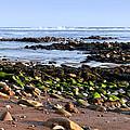 Rocky Shore by Svetlana Sewell