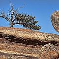 Rocky Tree by Kelley King