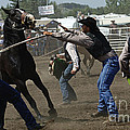 Rodeo Wild Horse Race by Bob Christopher