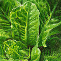 Romaine Unfurling by Steve Asbell