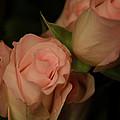 Romance In Pink by Deborah Benoit