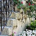 Romantic Steps by Sophie Vigneault