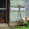Rooster And Hens by Lisa Phillips