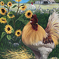 Rooster One Eyed Jack by Ruth Wallace