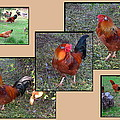 Rooster Red by Joyce Dickens