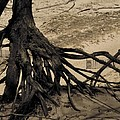 Roots by Odd Jeppesen
