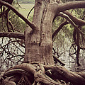 Roots by Tiffany Lane Photography